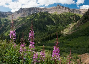 flowers-mountains-web